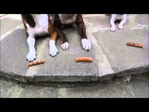 Three Dogs, Told to Wait for Their Treats