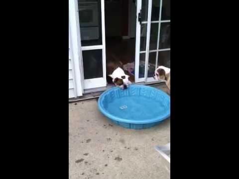 Gus versus Pool