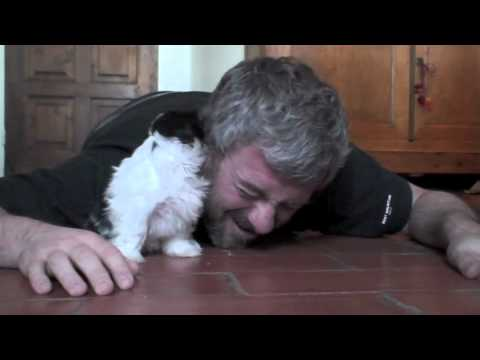 Adorable Puppy Plays, Owner Lies on the Floor
