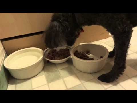 Dog Eats Food Only If He Mixes it All by Himself