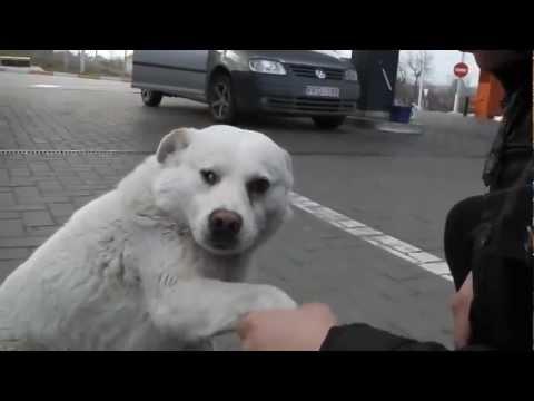 """Friendly stray dog named """"White"""""""