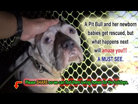 A Pit Bull and Her Newborn Pups Get Rescued
