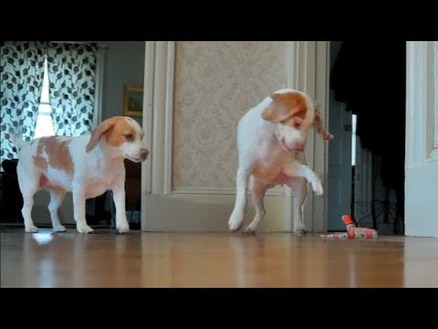 Have No Fear: When a Toy Snake Scares His Sister, this Protective Pup Jumps to Her Defense.