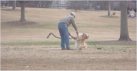 Onlookers Catch Man Getting Creative When His Park-Loving Dog Doesn't Want to Go Home