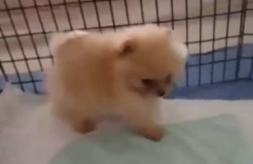 The Cutest Puppies You Will See All Day
