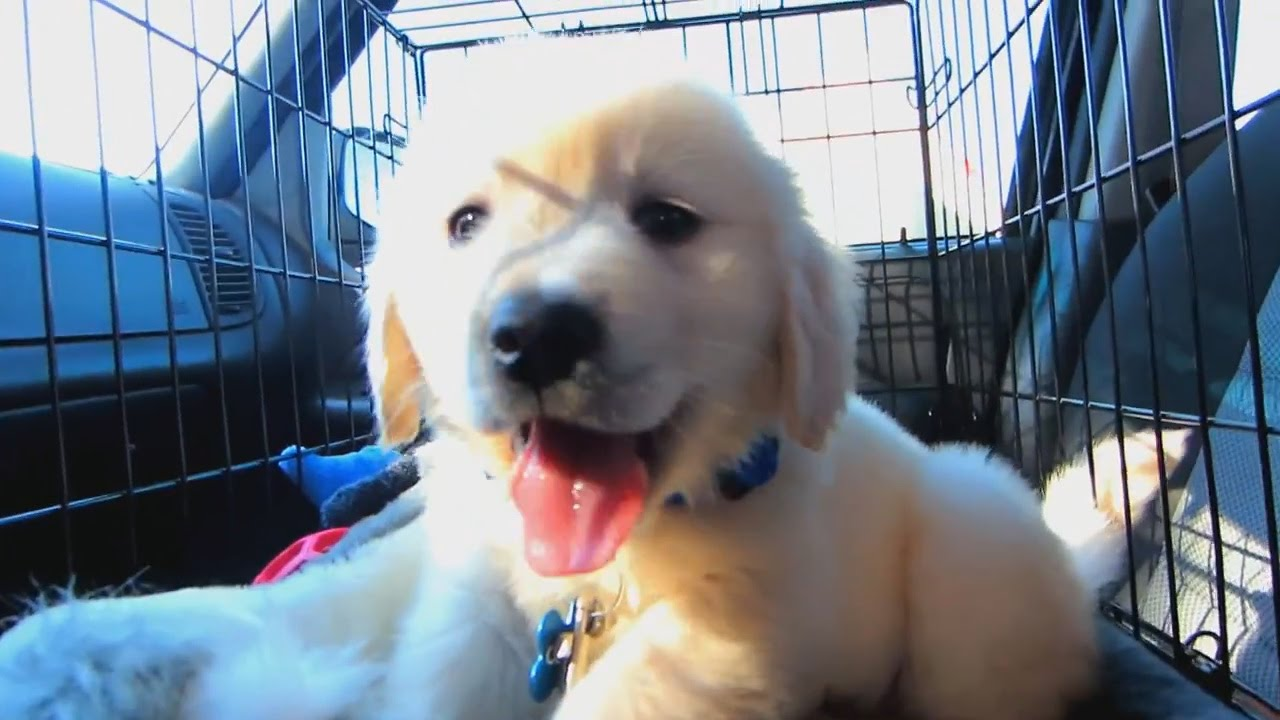 Love Dogs? Then This Video Will Be The Best Video You Will Watch All Year