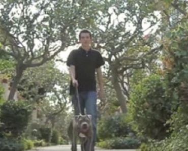 Lonely Autistic Boy Gets a Dog and It Works Wonders