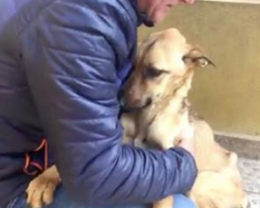 Man Finds Dog On The Street But Is Stunned To Find This When He Picks Her Up