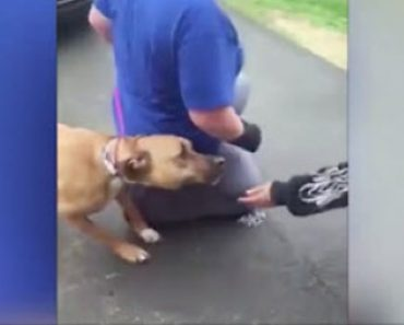 Dog Reunited with Man after 2 Years