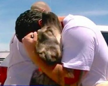 Soldier Saves a Puppy in Iraq Then Brings Him Home to California
