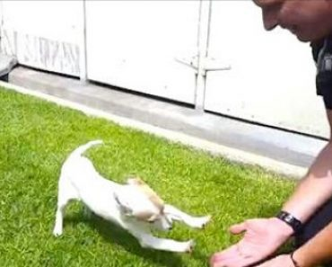 Puppy Gets Happy Reunion with the Officer Who Saved Him
