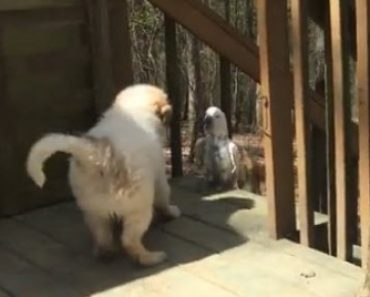 A Fluffy Puppy and His Buddy Bird Are Having Lots of Fun