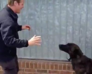 A Dog is Reunited With His Handler
