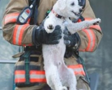 Adorable Dog Saved from Apartment Fire Can't Stop Grinning