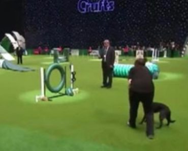 Dog Stops To Poop On The Agility Course