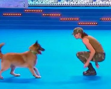 Belgian Shepherd Does CPR Trick During World Dog Show