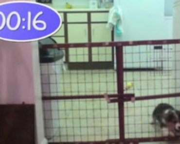 Puppy Escapes A Fool-Proof Gate