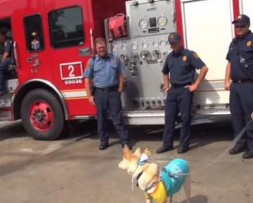 Adorable Service Dog Visits the Fire Station