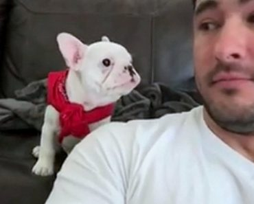 This Puppy Had An Adorable Reaction When He Is Called Handsome