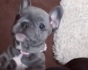 The Strangest Puppy Bark I Have Ever Heard