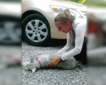 This Dog Gets So Excited About Seeing Her Human That She Actually Passes Out!