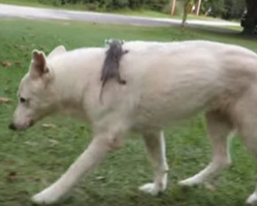 VIDEO: Dog Adopts A Baby Opossum And They Are Still Close, 2 Years Later
