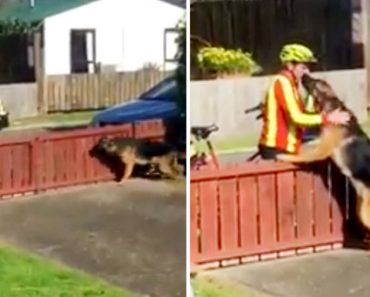 Hidden Camera Catches Postman Visiting A Dog Every Day