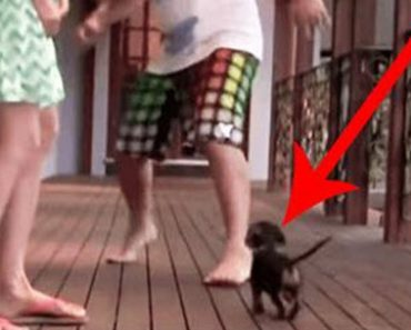 When This Puppy Sees Someone 'Attack' His Owner He Turns Adorably Vicious