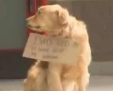 Shoppers Stop To Look At A Dog Sitting At A Store But The Sign Around His Neck Said 'Waiting'