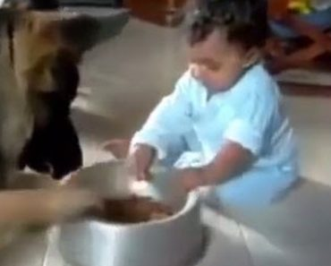 The Baby Slides The Food Dish Away From The Dog But The Dog Keeps Sliding It Back