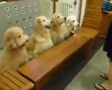dogprayers_1050x550
