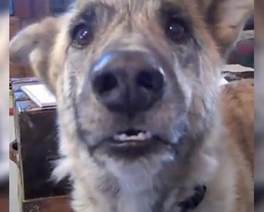 He Tells His Pooch He Ate The Food But You Have To Hear What The Dog Says Back