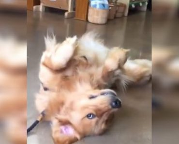 It's Time To Leave The Pet Store But This Dog Decides To Throw A Tantrum