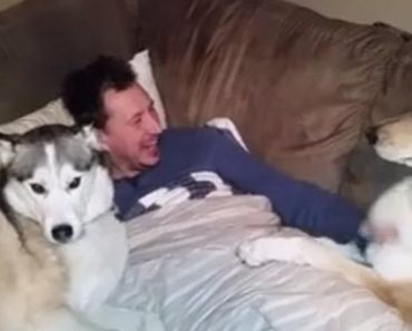 When One Dog Gets Attention From The Human The Other One Has A Temper Tantrum