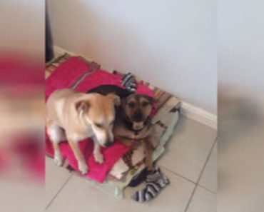 One Of These Pups Dug A Hole And It Doesn't Take Long To Figure It Out