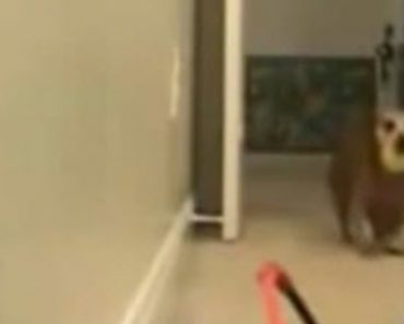 A Dog Plays Fetch With Himself And Has A Blast!