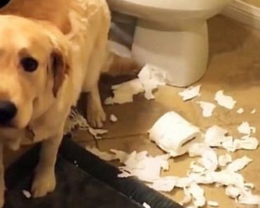 Mum Wants To Know What Happened But When The Dog Answers It Goes Viral
