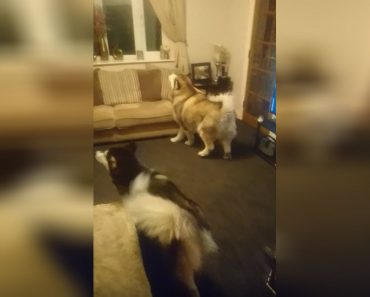 Grandma Is Hiding In The House And The Dog Freaks Out Until He Finds Her