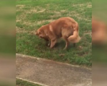 She Catches Her Dog Digging In The Yard But The Guilty Look On His Face Says It All