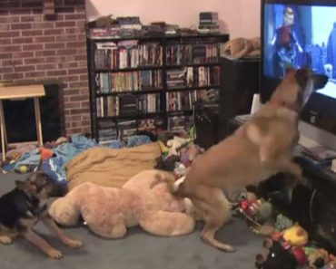 Pooch Responds In A Hilarious Way When His Favourite Film Comes On The Telly