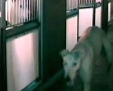 Something Strange Is Going On At This Animal Shelter, So They Installed A Camera