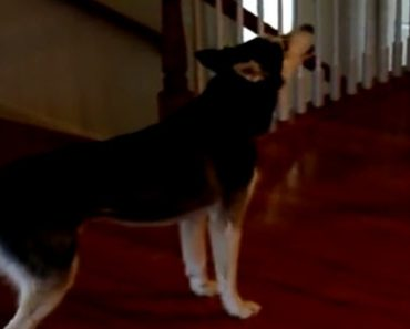 """Owner Wants To Know If His Dog Is Stupid But When The Dog Says """"No!"""" It Is Absolutely Hilarious"""