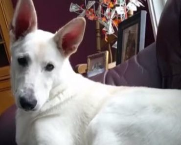 You Will Laugh Out Loud When You See This Dog Reacting To His Own Fart