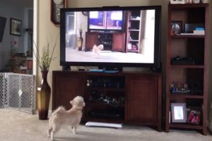 Dad Catches Dog's Hilarious Reaction As He Responds To Commands On TV