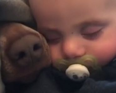 The Baby Is Enjoying A Nice Nap But Then A Nose Shows Up Out Of Nowhere
