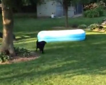 Children Hide Under The Pool But The Dog Does Something Totally Unexpected