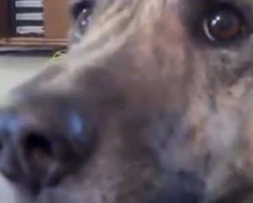 He Told His Dog The Food Is Gone. Wait Till You Hear The Dog Respond